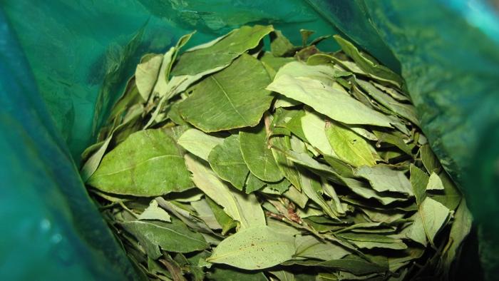foglie di coca