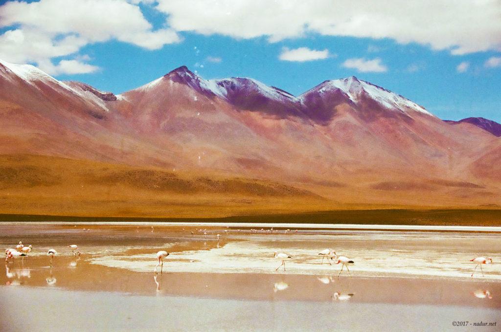 Laguna Hedionda - Bolivia